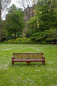 empty wooden park seat bench and daisy flowers at princes street gardens at edinburgh scotland england UK