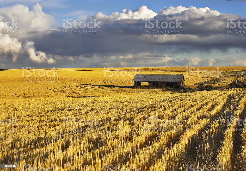 Vuoto in legno shed in campo foto stock royalty-free