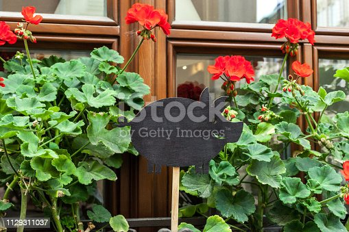 istock Empty wooden signboard pig shap and begonia red flowers 1129311037