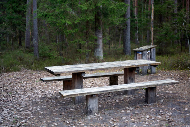 Empty wooden table and bench in spring wild forest stock photo