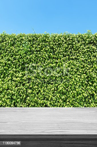 677933036 istock photo Empty Wooden Table And Green Hedge Background 1130094736