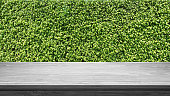 Empty wooden table and green hedge background