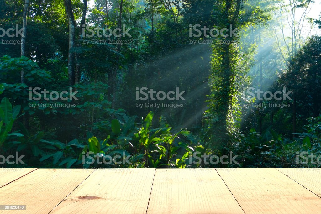 empty wooden table and rain forest background stock photo