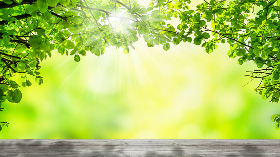 empty wooden table under the arch of green tree branches in an idyllic spring nature backdrop, advertising space on gray wooden board on blurred abstract background