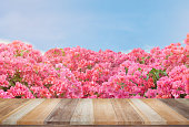 Empty wooden table with pink flower and blue sky background, use for product display