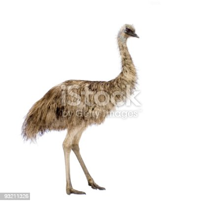 Emu in front of a white background.