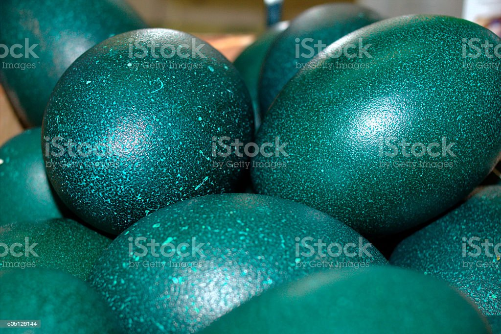 Emu eggs stock photo