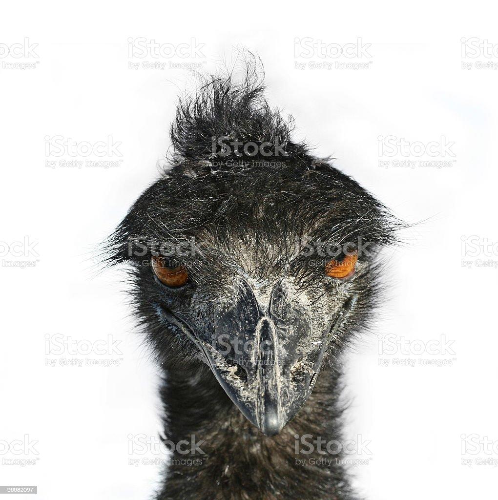 Emu Eyes stock photo