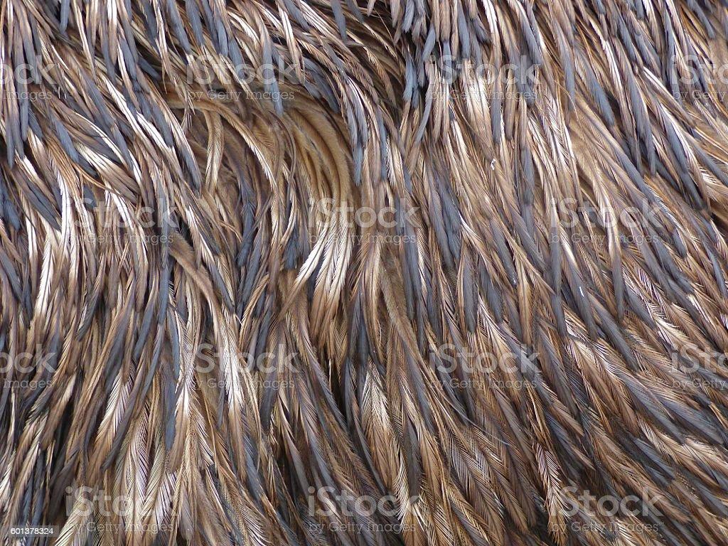 Emu Feathers stock photo