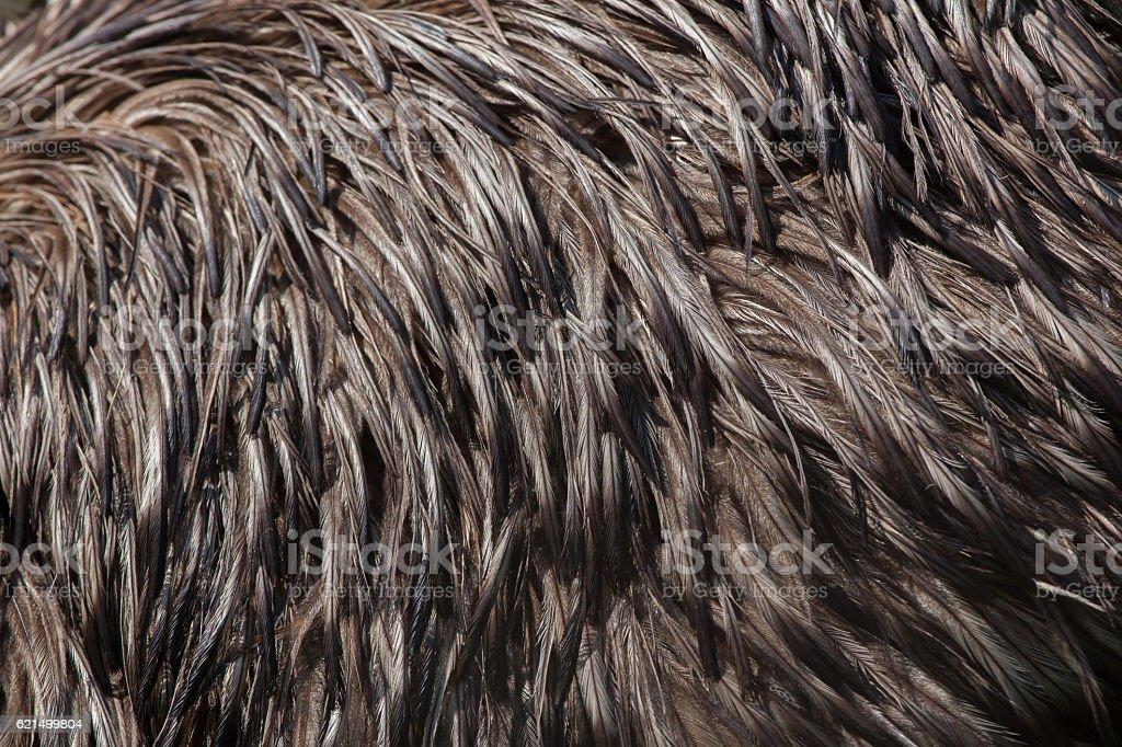 Emu (Dromaius novaehollandiae). Plumage texture. Lizenzfreies stock-foto
