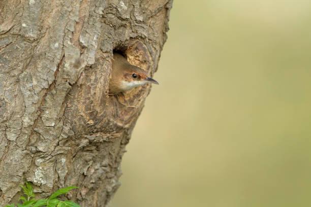 En el nido stock photo