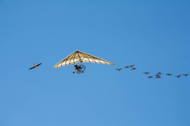 ULM en vol accompagné par un vol d'oiseaux Prise de vue au 18/135, 200 iso, f13, 1/250 seconde ulm stock pictures, royalty-free photos & images