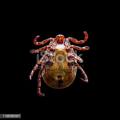 646435702 istock photo Encephalitis Virus or Lyme Borreliosis Disease or Monkey Fever Infectious Dermacentor Tick Arachnid Parasite Insect Macro Isolated on Black 1153282327