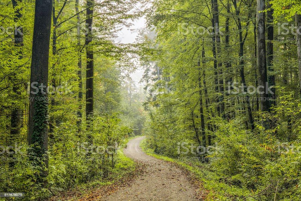 Enchanted Autumn Bavarian Forrest stock photo