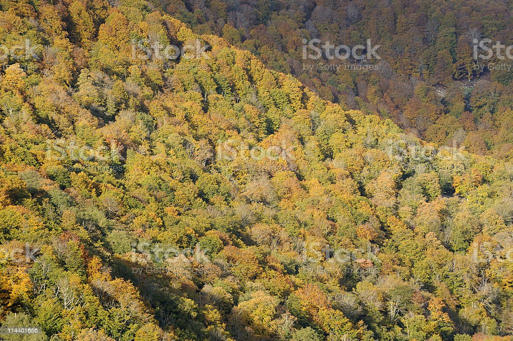 Enchanted Autumn Forest royalty-free stock photo