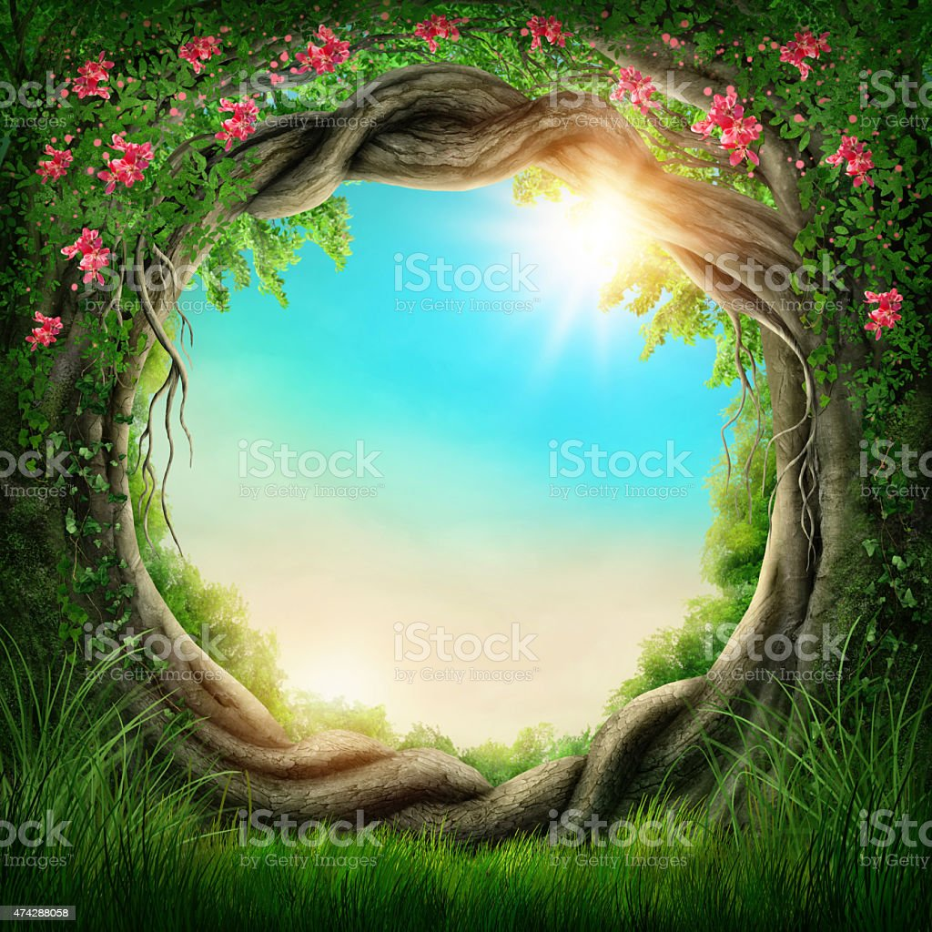 Enchanted dark forest stock photo
