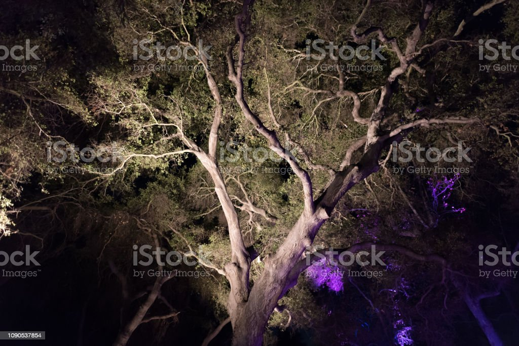 Enchanted forest - a beautifully lit majestic tree at night