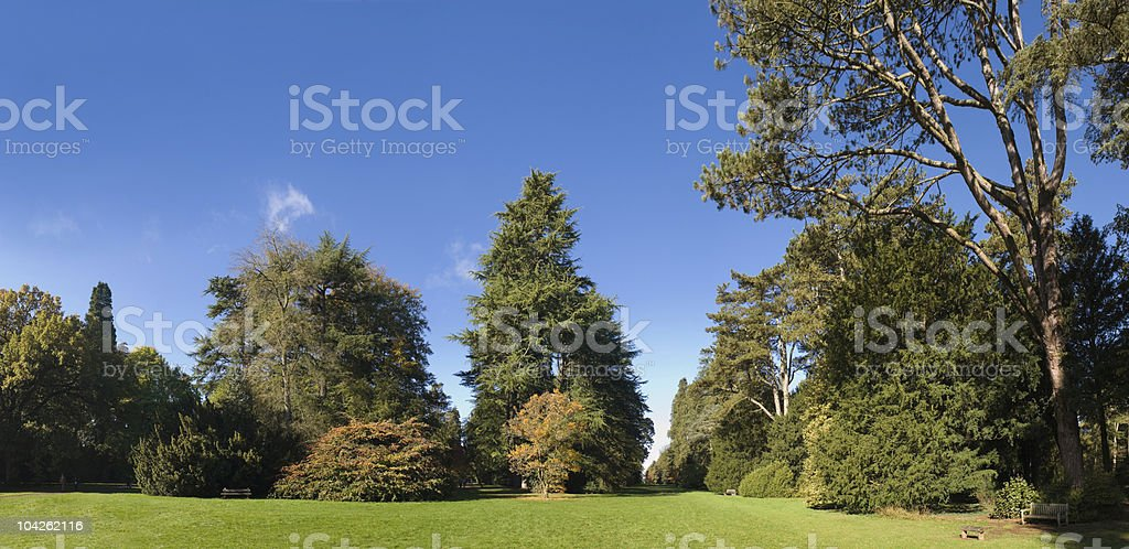 Enchanted forest royalty-free stock photo