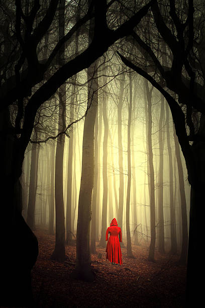 enchanted forest stock photo
