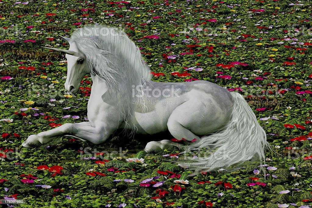 Enchanted royalty-free stock photo