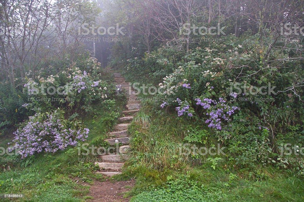 Enchanted Steps stock photo