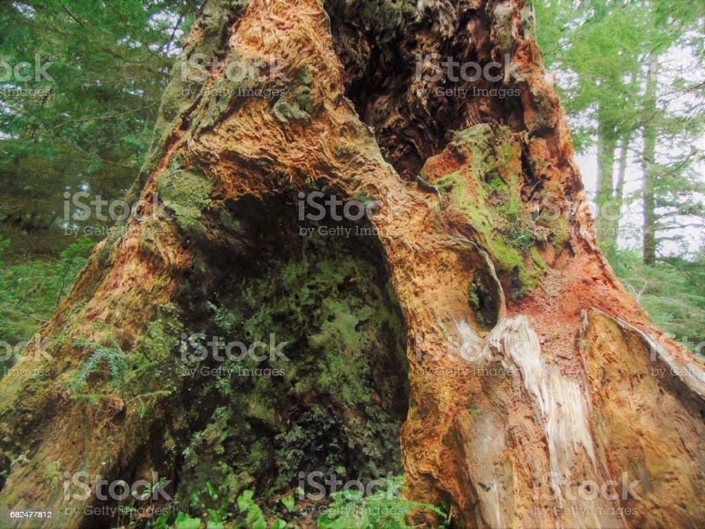 Enchanted arbre photo libre de droits