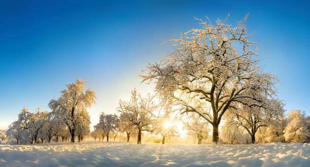 Enchanted winter landscape after sunrise picture id1176604057?b=1&k=6&m=1176604057&s=612x612&w=0&h=ortsuunhgq3rpccx1j1agqi5z0gol8bri uyyjtr9qk=