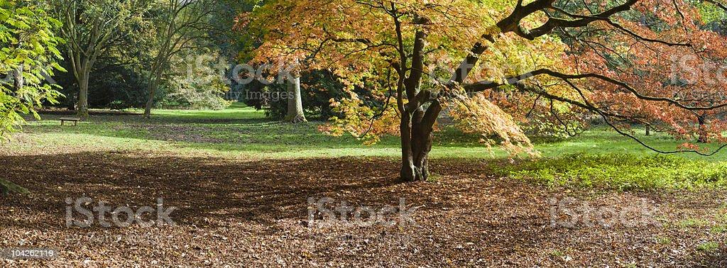 Enchanted wood royalty-free stock photo