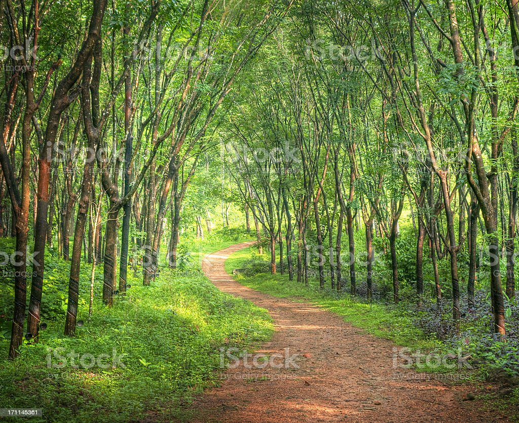 Encantadora floresta Lane - foto de acervo