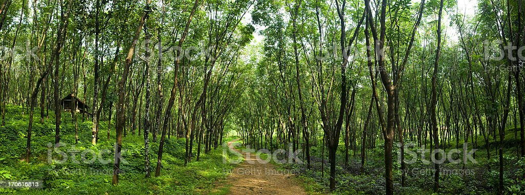 Enchanting Forest Path stock photo