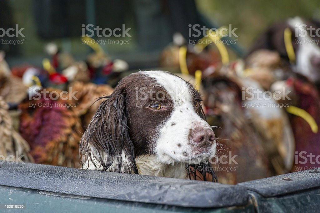 End of a hard days work... stock photo