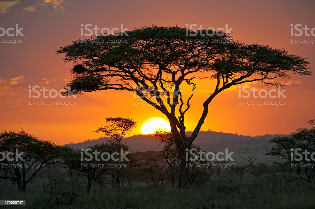 End of a Safari-day in the Serengeti, Africa stock photo