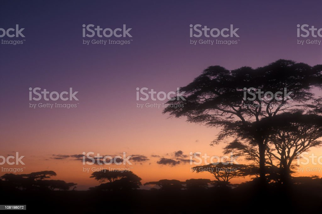 End of a Safari-day in the Serengeti (1) royalty-free stock photo