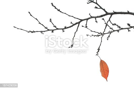 A single leaf on the branches of a tree signals the end of the autumn season.  Isolated on white.