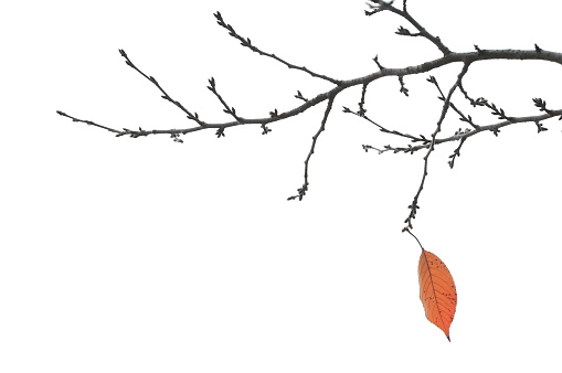 End Of Autumn - Final Leaf on a Branch