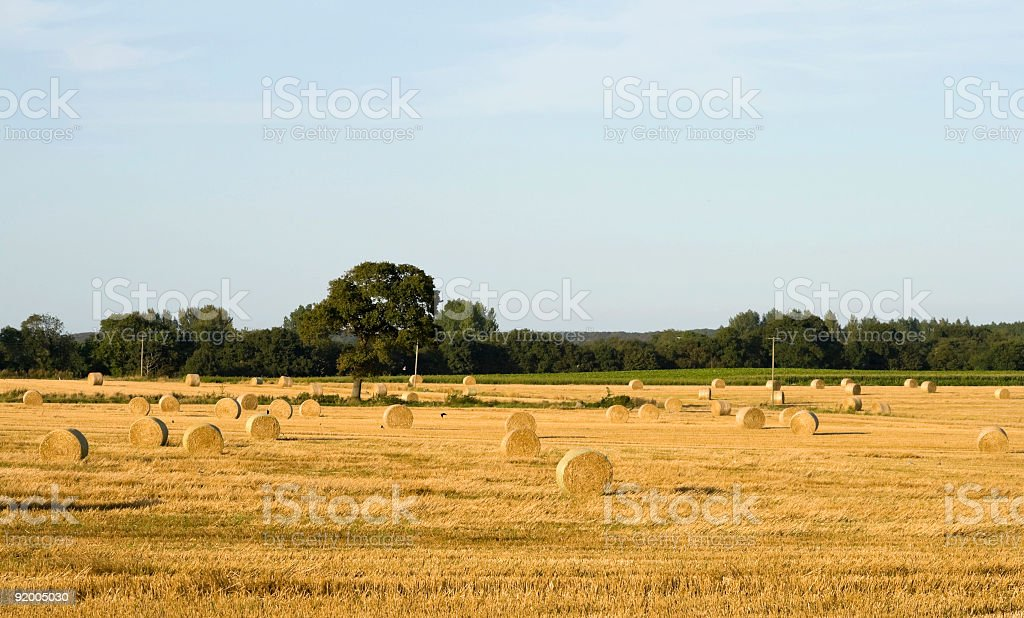 End of harvest royalty-free stock photo