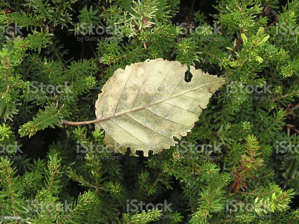 End of Summer royalty-free stock photo