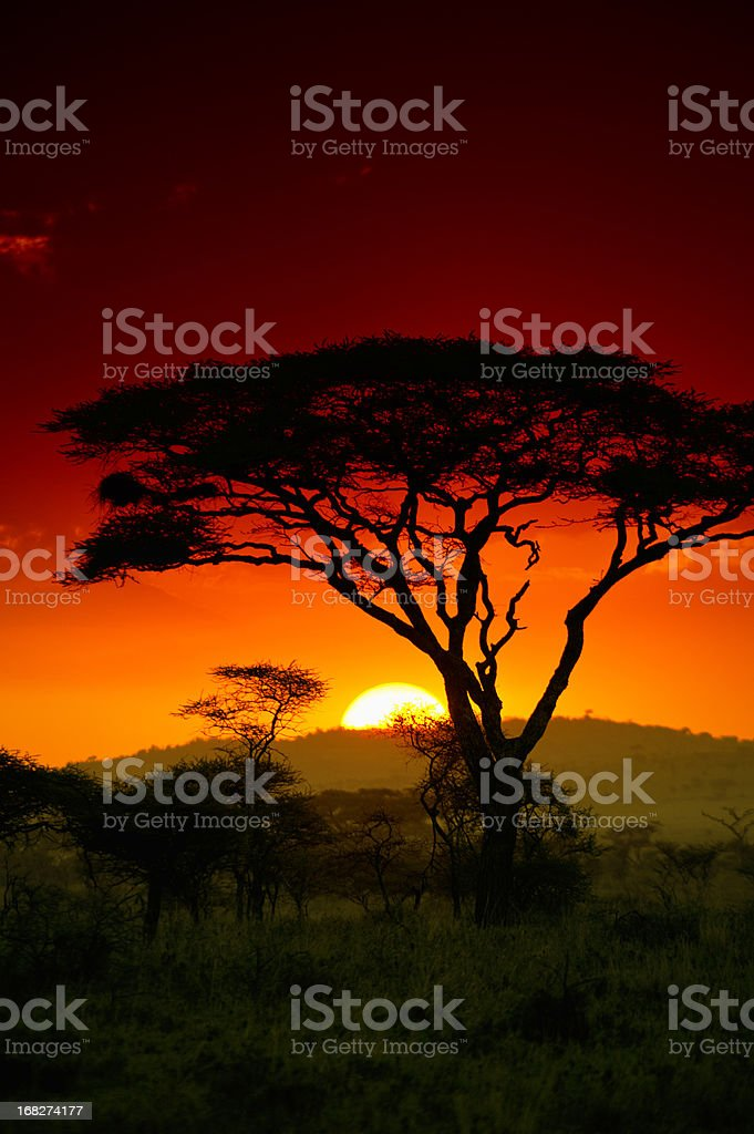 End of the day in the safari in Serengeti Africa stock photo