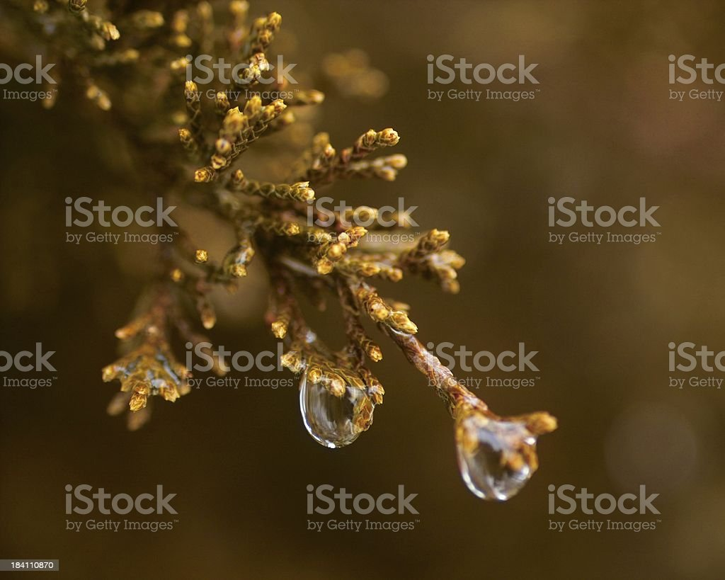 end of winter royalty-free stock photo