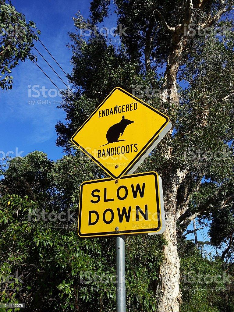 Endangered bandicoots warning sign stock photo
