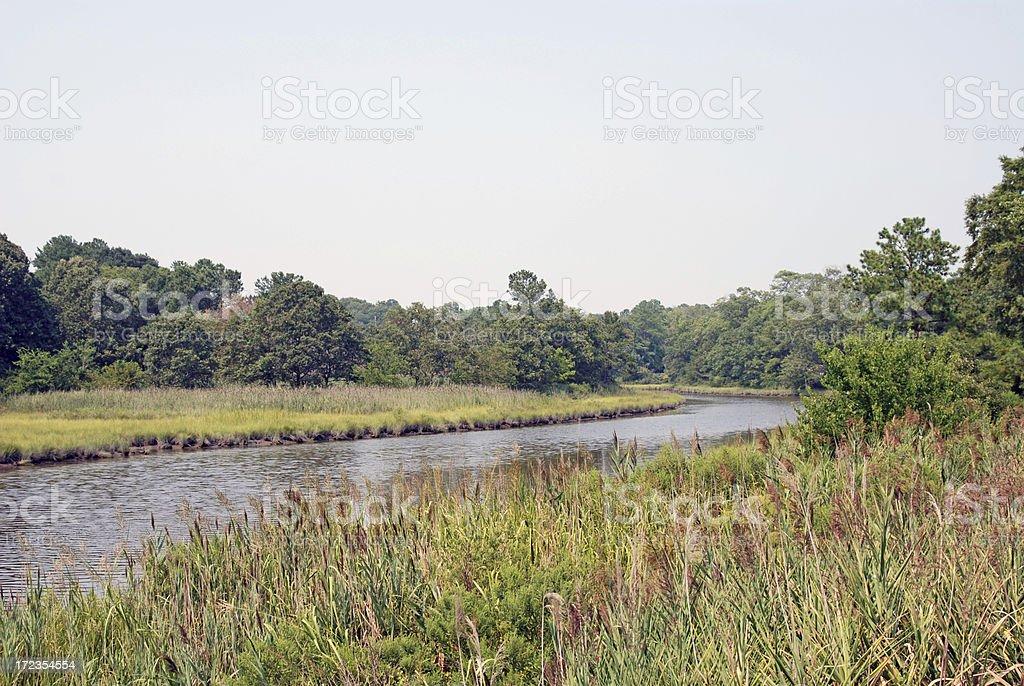 Endangered Marshland royalty-free stock photo