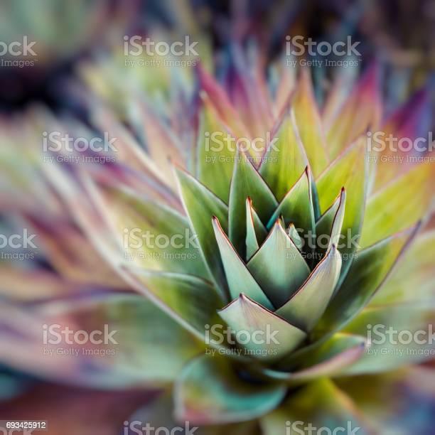 Endemic plant from mount roraima in venezuela picture id693425912?b=1&k=6&m=693425912&s=612x612&h=x493rhj2ffpajgaglrfuiqhi ybsoouixrhra1j3r q=