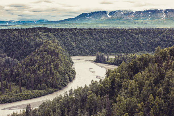 Endless Alaskan forest and wilderness stock photo