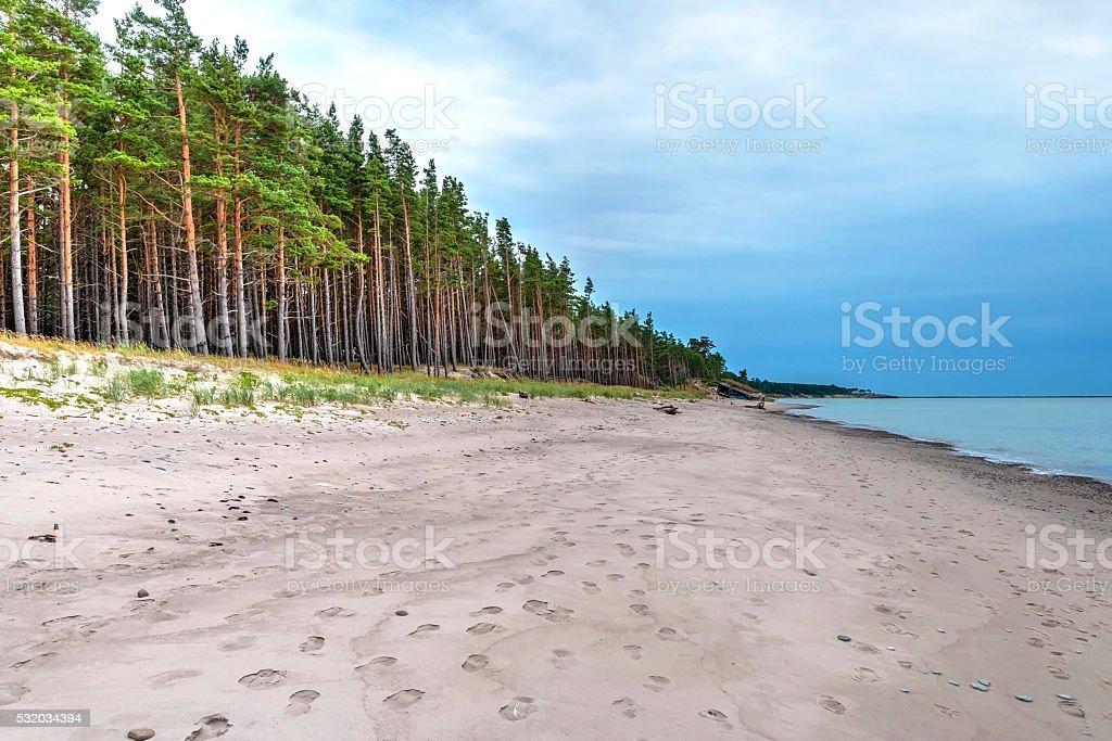 Endlosen Küstenlinie mit Wald – Foto