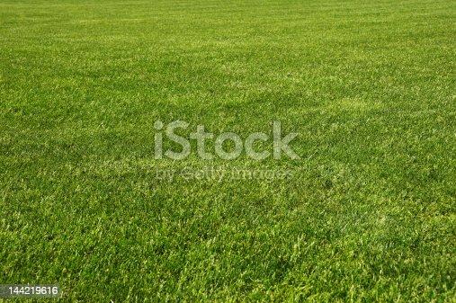 istock Endless field of fresh green grass 144219616