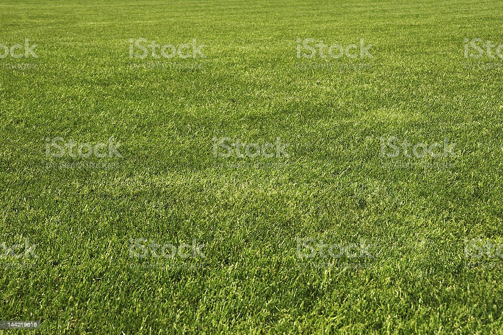 Endless field of fresh green grass stock photo