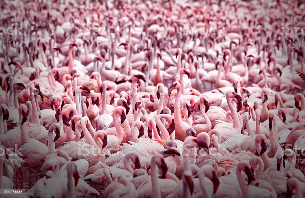 Endless Flamingoes stock photo