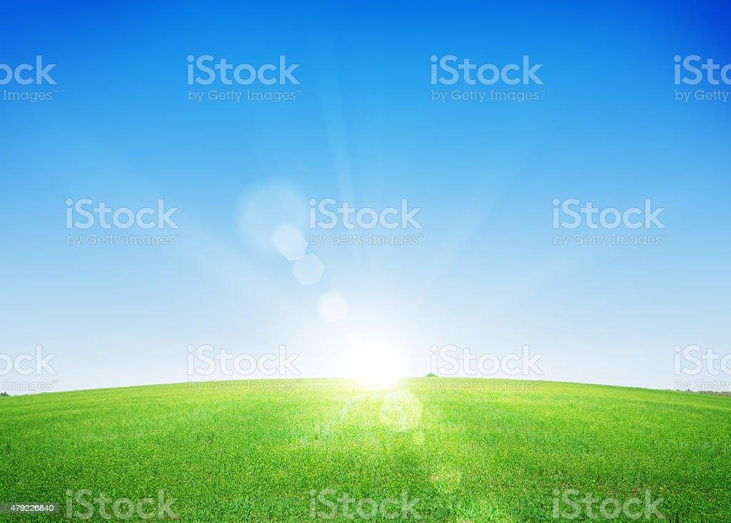 Endless green grass field and deep blue sky stock photo