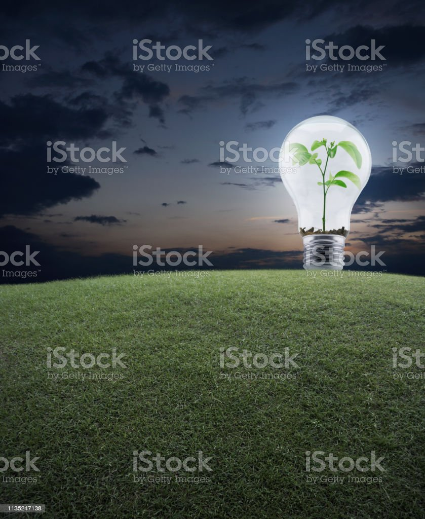 Light Bulb with small plant inside and green grass field over sunset...