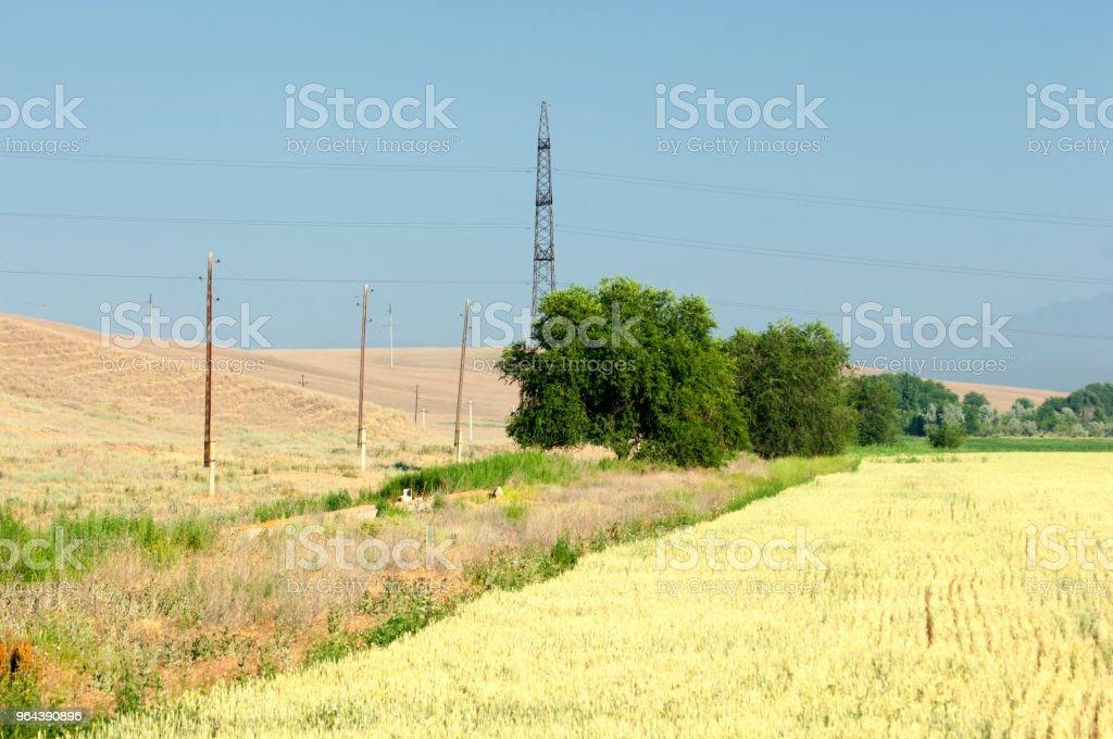 energie Polen. tarwe - Royalty-free Achtergrond - Thema Stockfoto